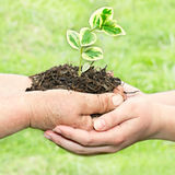 New life development Royalty Free Stock Images