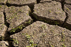 New life on dry land. Plants starting to grow on a dry soil royalty free stock photos