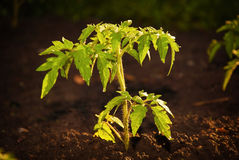 New life ecological plants. stock images