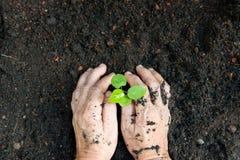 New life or environmental conversation concept Stock Photo