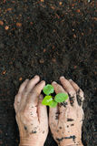 New life or environmental conversation concept Royalty Free Stock Image