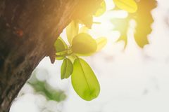 New life everyday concept green tree sprout in the park. With morning sun light background stock photos