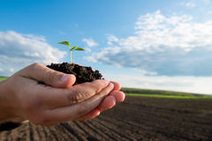 New life. Farmer hand holding a fresh young plant. Royalty Free Stock Images
