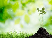 Growth of new life on sky background. New life green design young fresh plant Royalty Free Stock Images
