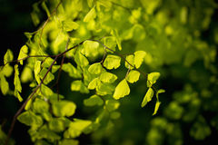 New life green leaf. Green leaf in macro focus royalty free stock images