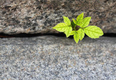 New life Royalty Free Stock Photography