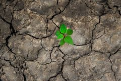 New life in the green world. Green plant growing in arid soil and cracked ground or dead soil. royalty free stock photo