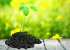 New life. Grow growing seed plant soil green stock photo
