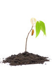 New life on a grow life. Please conserve the environment for our earth Stock Photos