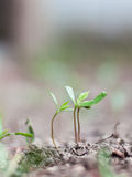 New life growing Royalty Free Stock Image
