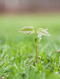New life growing Stock Photography
