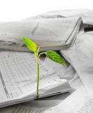New life growing out from recycled papper Royalty Free Stock Images