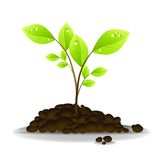 New Life - Growth Royalty Free Stock Photography