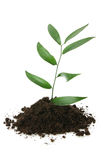 New Life(growth concept). New Life design (growth concept Stock Images