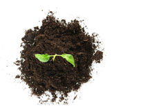 New Life (growth concept). New Life design (growth concept Stock Image