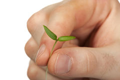 New Life (growth concept) Royalty Free Stock Photography