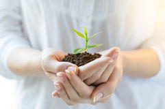 New life and growth concept stock photo
