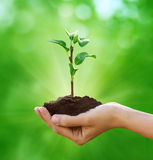 New life in hand Royalty Free Stock Images
