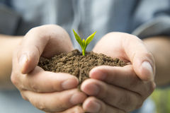 The new life. Hands holding the earth, new life just budding stock photo
