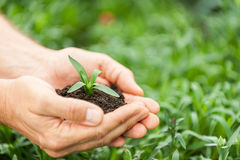 New life in his hands. Royalty Free Stock Images