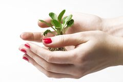 New Life In Hands Royalty Free Stock Image