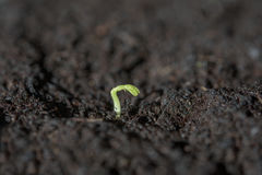 New Life In The Nature Royalty Free Stock Photo