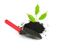 New life: just planted Stock Photography