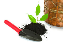 New life: just planted Royalty Free Stock Image