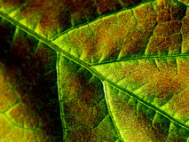 New Life Leaf. Green Leaf Abstract royalty free stock photos