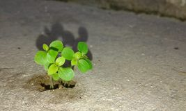 new life Stock Photography