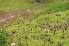 New life in the moss Royalty Free Stock Images
