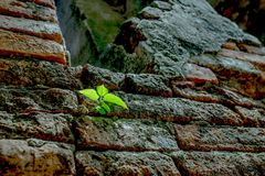 New life on old walls fallow. Royalty Free Stock Images