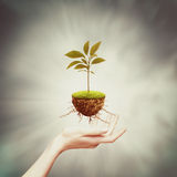 New life from one bud Royalty Free Stock Photo