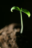 New life plant Royalty Free Stock Images