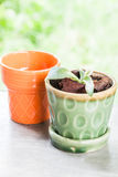 New life plant in green ceramic pot Stock Image