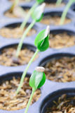 New Life Plant Sapling Stock Photography