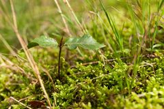 New life - plant sprout. Growth seed.  stock photo