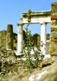 New life in Pompei. Royalty Free Stock Images