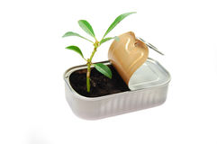 New life from rubbish Stock Photography