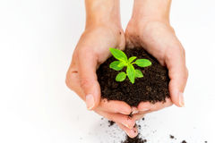 New life- saving planet Royalty Free Stock Photo