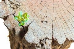 New life Seedlings on stump Stock Image