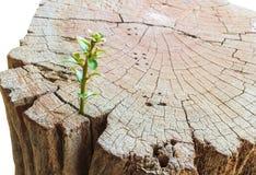 New life Seedlings on stump Stock Photo