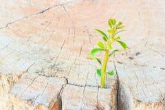 New life Seedlings on stump Stock Photography