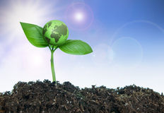 New life. Small green earth growing from a plant seedling stock image