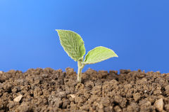 New life small plant royalty free stock images