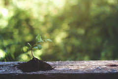 New life. Small plant growing on earth royalty free stock images