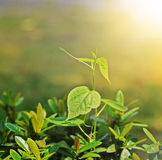 New life small tree and sunshine Stock Image