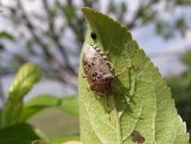 New life. spring. bug Stock Photography