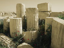 New Life Springs Eternal. New life growing out of ancient ruins Royalty Free Stock Photography