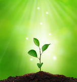 New life..Sprout in green background. Royalty Free Stock Photo